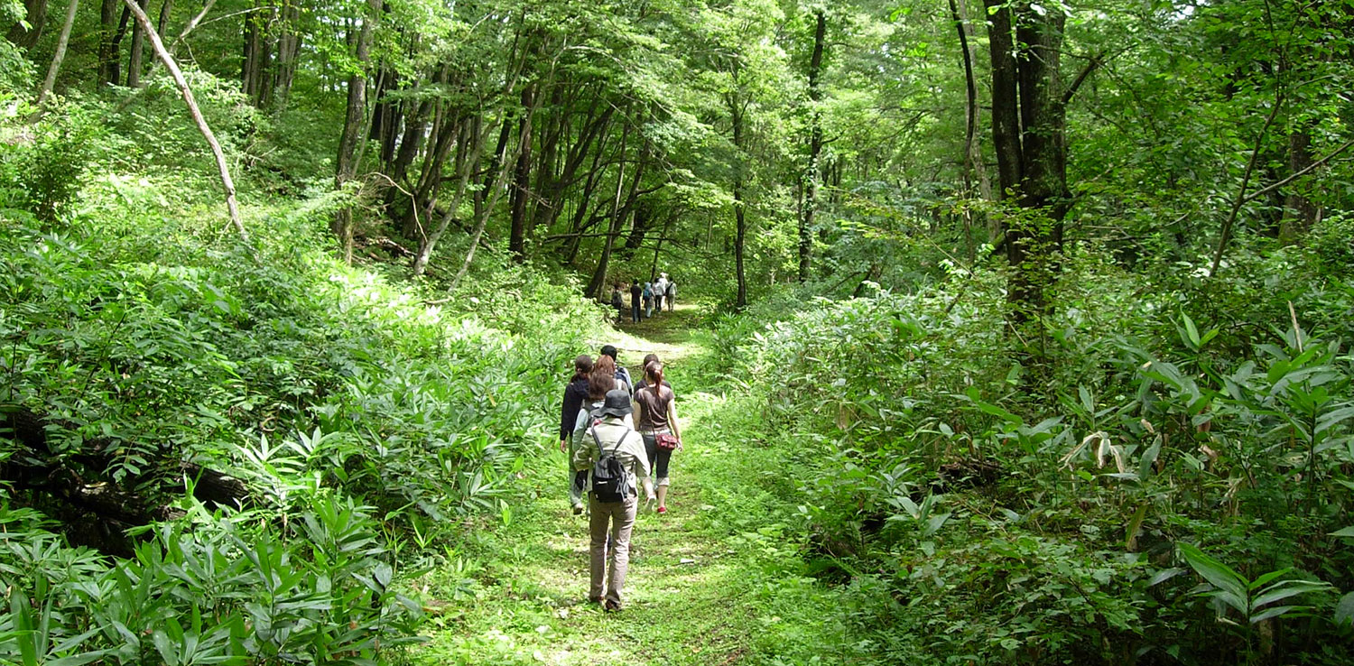 One of the forest bathing activity in Japan. | Photo: Hiking Research